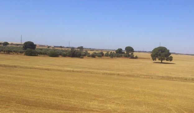 La fotovoltaica ve la luz en España